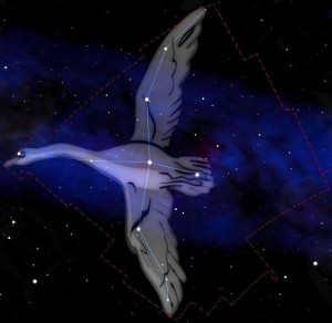 Cygne_constellation