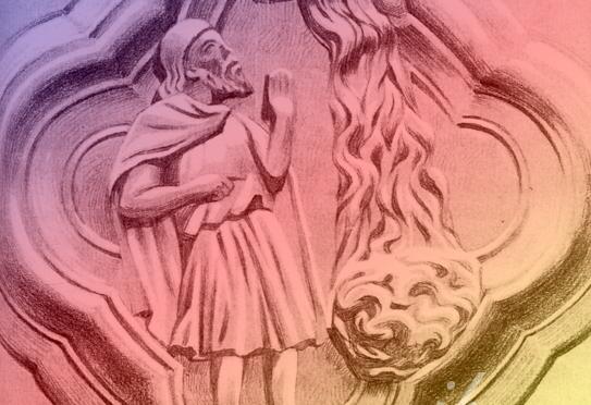 Chrysopée et Toison d'or (2)