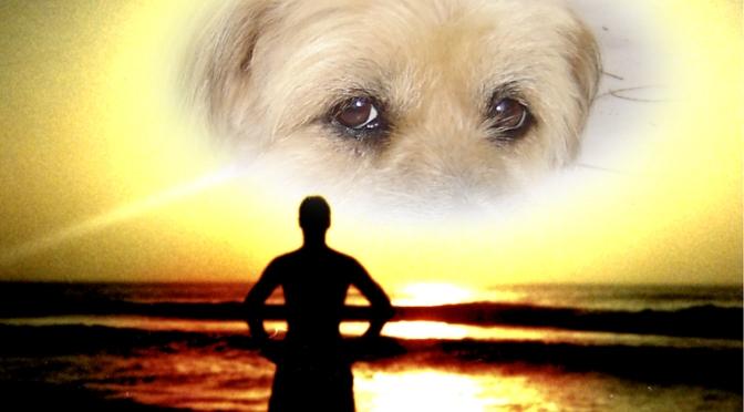 TCI : Communiquer avec son animal disparu