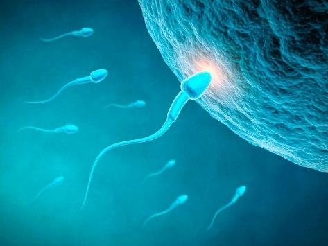 un-spermatozoide