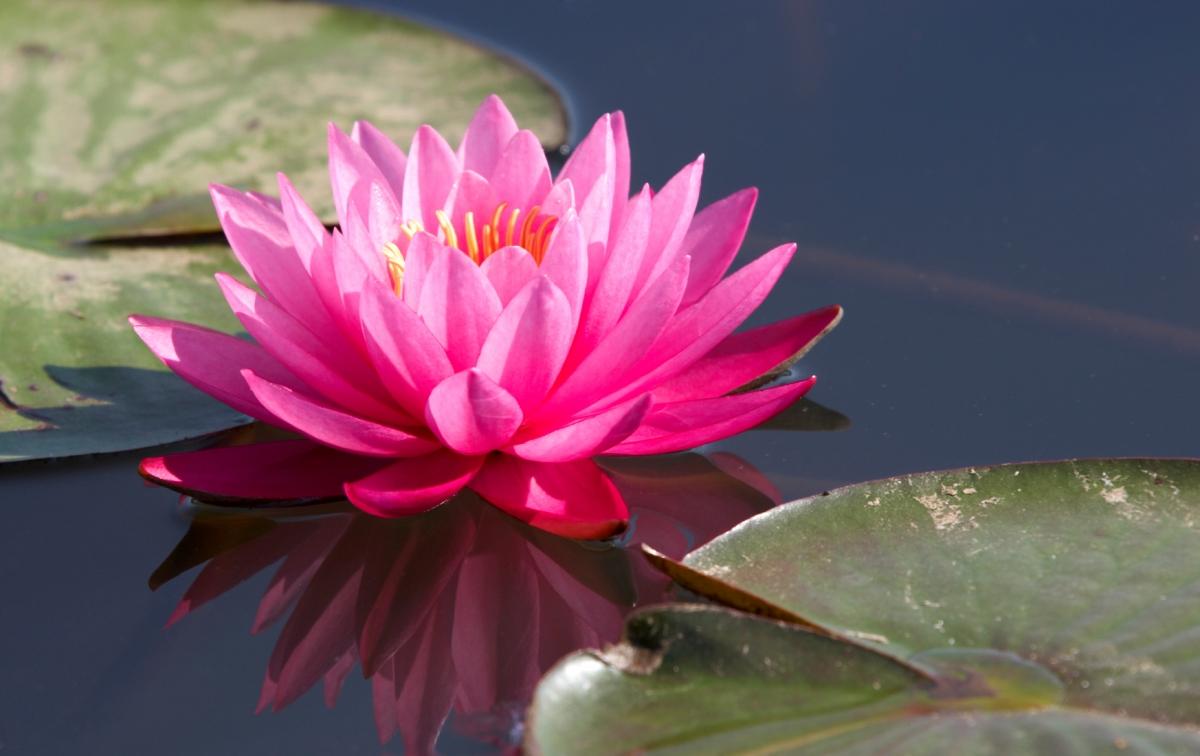 L'Odyssée du féminal : hommage à Lotus de Païni