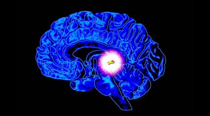 L'œil pariétal et la glande pinéale : la vision intérieure